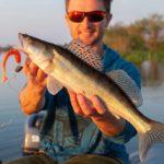 Zander angeln im Sommer