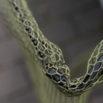 Cormoran Klappkescher 2tlg - Dehnbares Netz