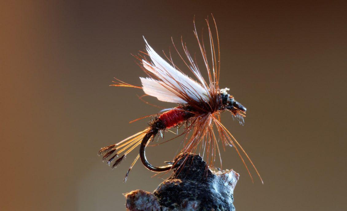 Kunstfliege zum Bachforellen angeln